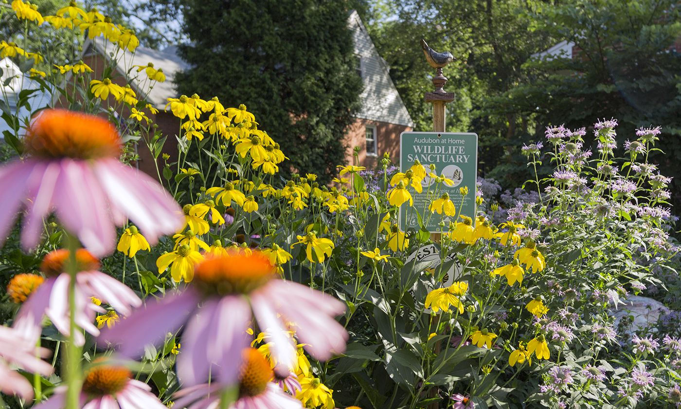 How To Turn Your Yard Into An Ecological Oasis Yes Magazine
