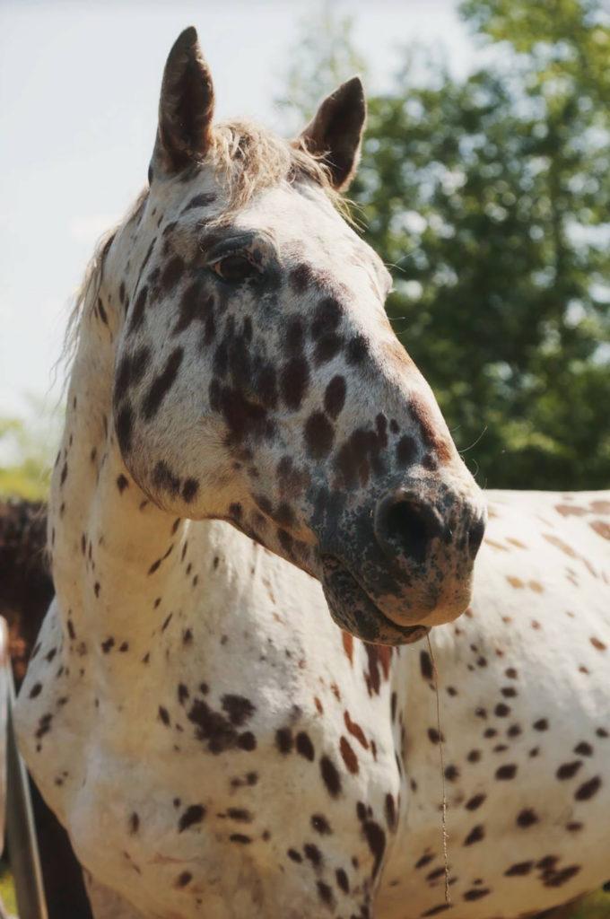 A horse at Sacred Way Sanctuary
