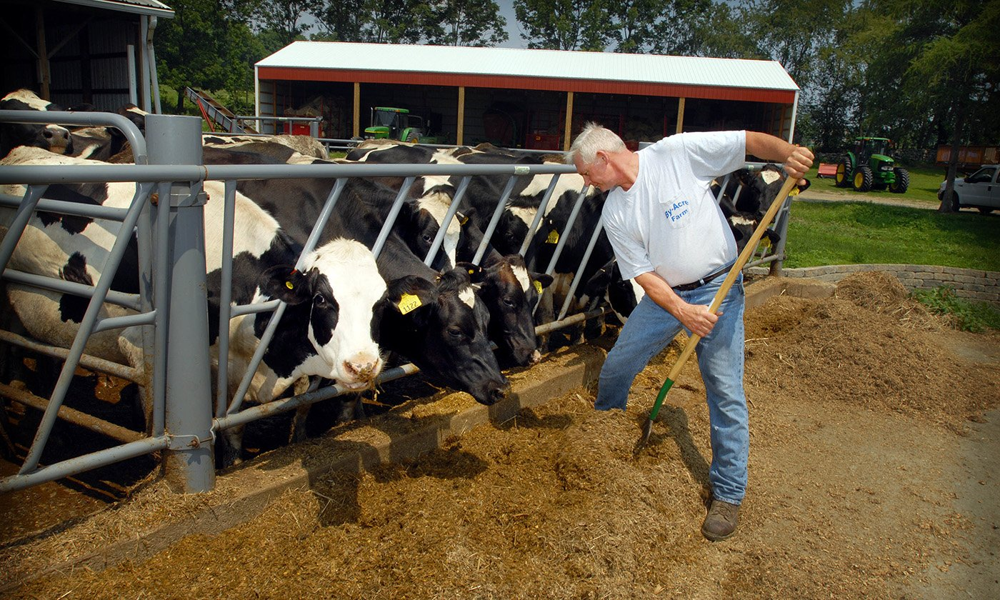 These Small Dairy Farms Are A Model For A Resilient Food System Yes Magazine