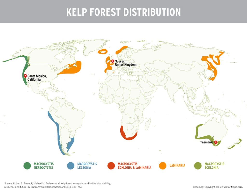What Kelp Forests Can Do for the Climate