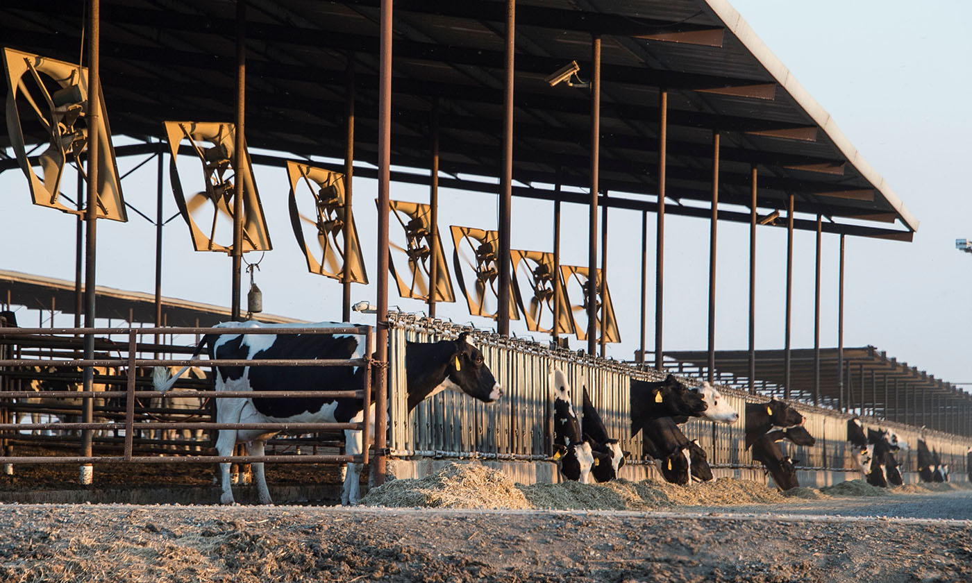 What Fossil Fuels and Factory Farms Have in Common