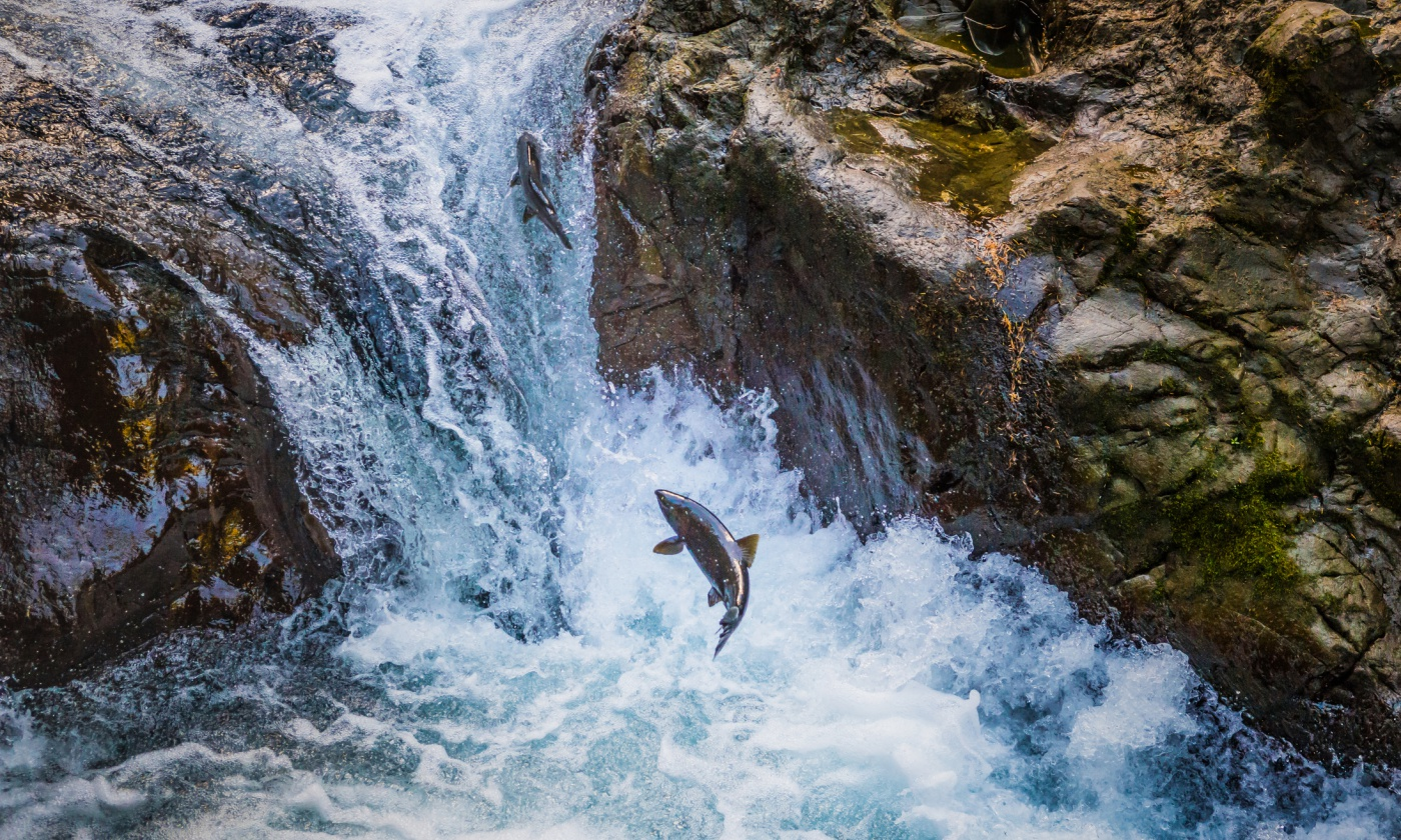 Supreme Court Affirms Native American Treaty Rights to Harvest Salmon