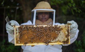 bees-urban-detroit.jpg
