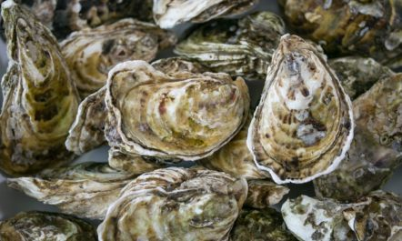 oyster-climate.jpg