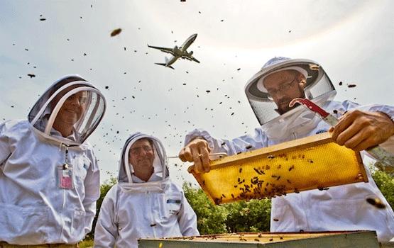 Airport beekeepers