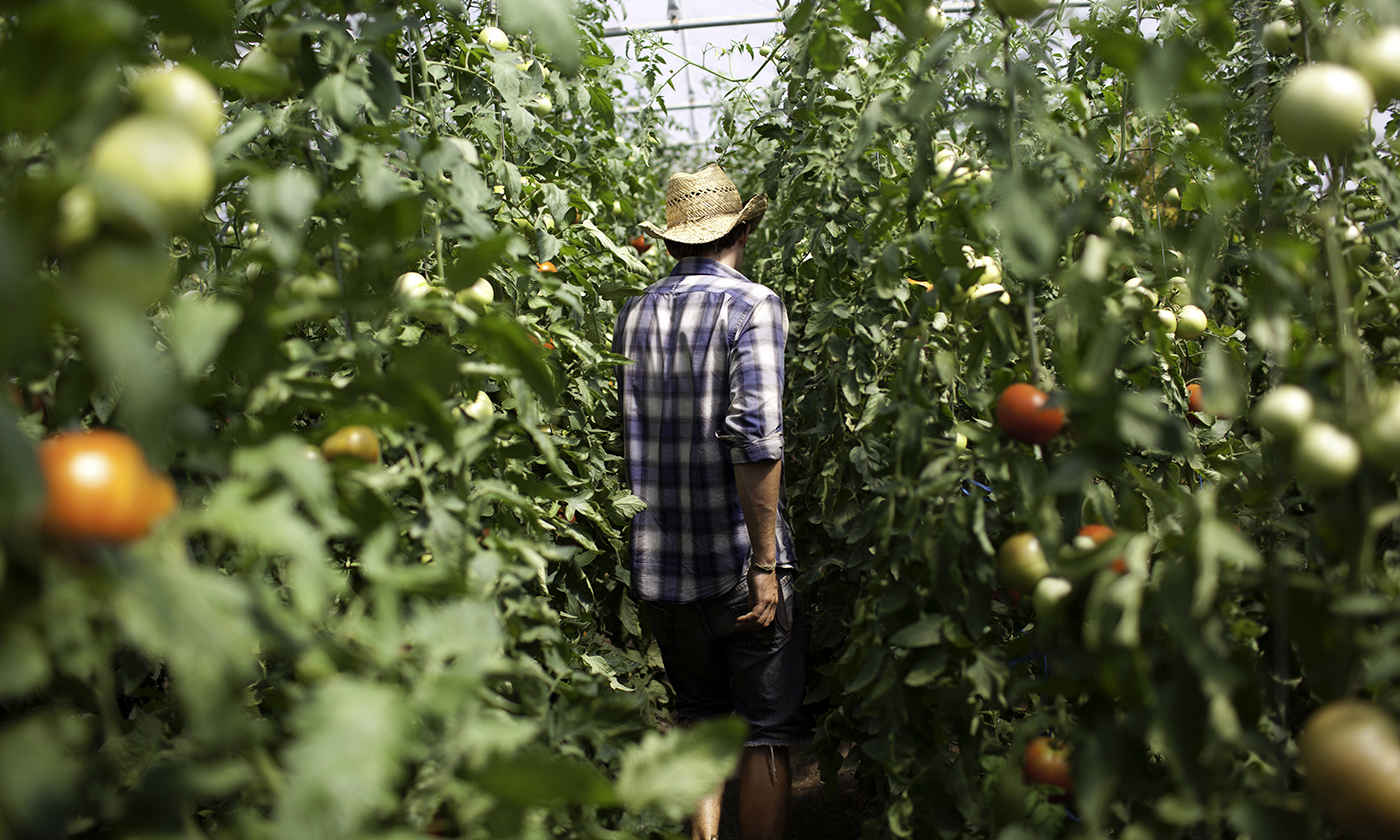 Can Organics Help Rural America Rebound?