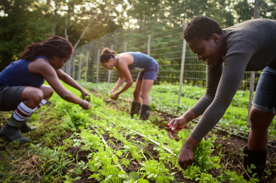 Tractors, Ritual Baths, and Dismantling Racism: Welcome to Black and Latino Farmers Immersion