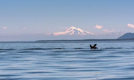 1.orca-salish-sea-rights.jpg