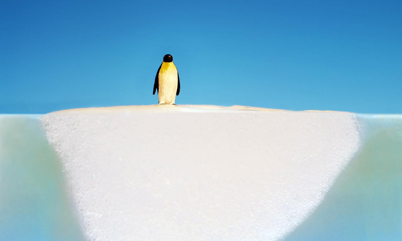 penguinonglacier.jpg