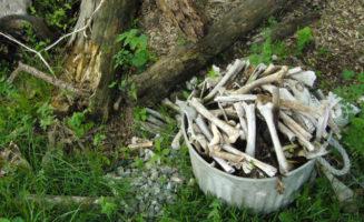 humancomposting_650.jpg