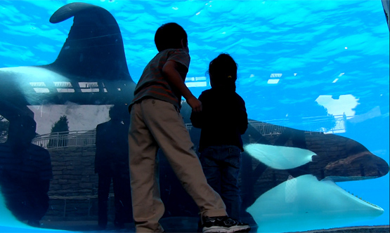 """Blackfish"" on CNN: Documentary about Captive Orca Whales Goes Mainstream"