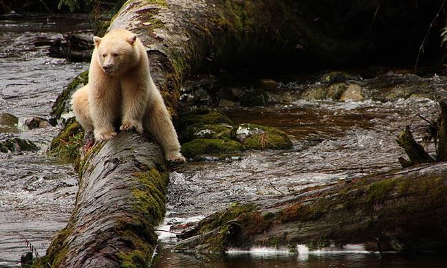 20 Years in the Making, Great Bear Agreement Protects World's Largest Temperate Rainforest