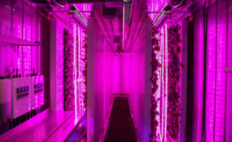 Inside the Freight Farms shipping container. It uses an array of red and blue LED lights for optimal leafy green growth.  Photo from Freight Farms.