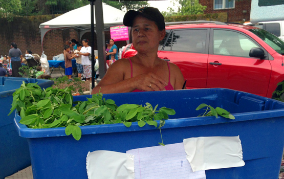 Market Offers Wealth of Tradition—and Veggies—for Immigrant Farmers and Shoppers