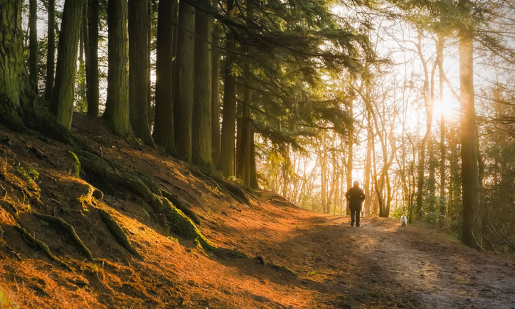 New Study Links Living Near Forests to Healthier Brains