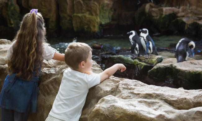 Zoos.jpg