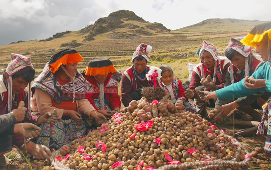 Indigenous Seed Savers Gather in the Andes, Agree to Fight Climate Change with Biodiversity