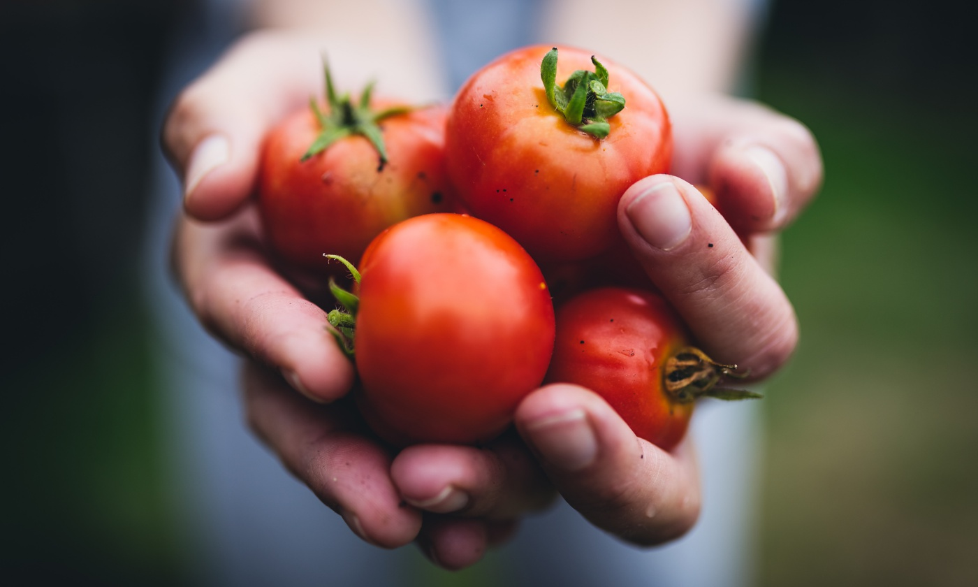 tomatoes-community.jpg