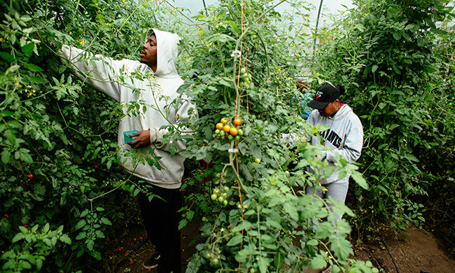 How to Help 55 Million People Out of Food Deserts