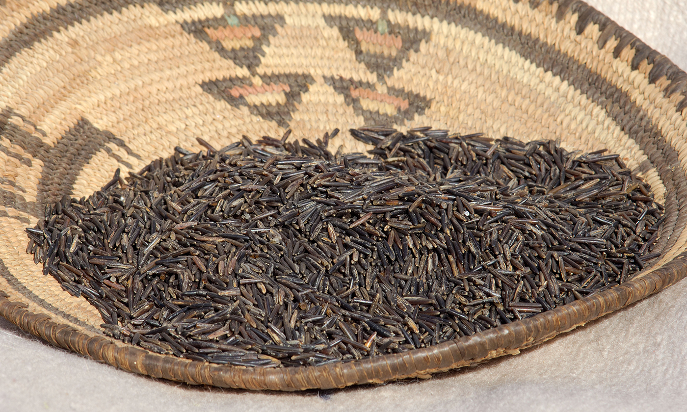The White Earth Band of Ojibwe Legally Recognized the Rights of Wild Rice