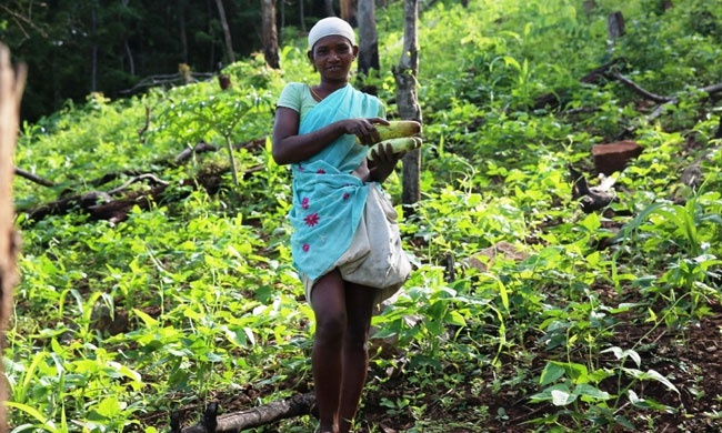 They Lost Their Jungles to Plantations, But These Indigenous Women Grew Them Back