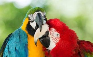 Birds Nuzzling photo from Shutterstock