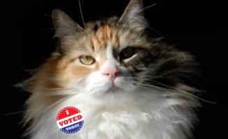 votingcat.jpg