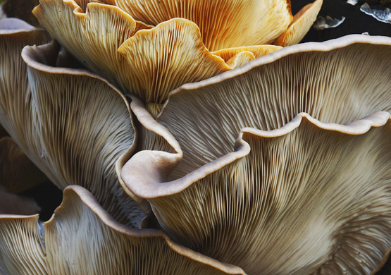 Portland's E. Coli Scare: How Mushrooms Could Have Helped Prevent It
