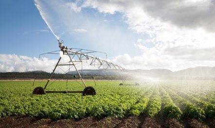 water-irrigation-agriculture-field.jpg