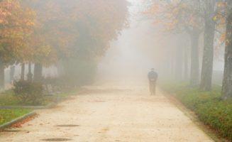 autumn-fall.jpg
