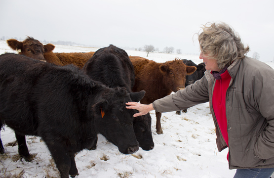 West Virginia Cattle Farmers Build the Local Food Economy They Need to Thrive