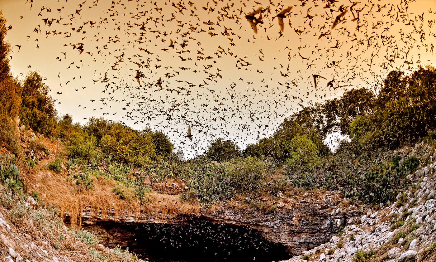 1.bats_Bracken_Cave_Preserve
