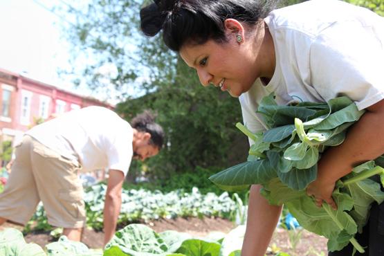 Nohemi Soria harvests collard greens.