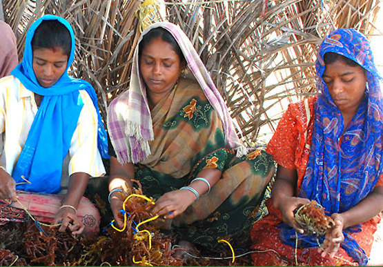 A New Source of Jobs for India's Rural Women? (Hint: It's in Your Shampoo)
