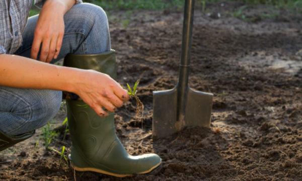 Dirt Soil Health Healthy Gardening.jpg