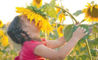 Sunflower photo by Vitalinka/Shutterstock